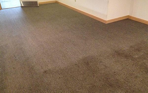 Excellent Carpet Care